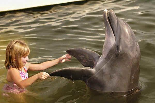 haai of dolfijn